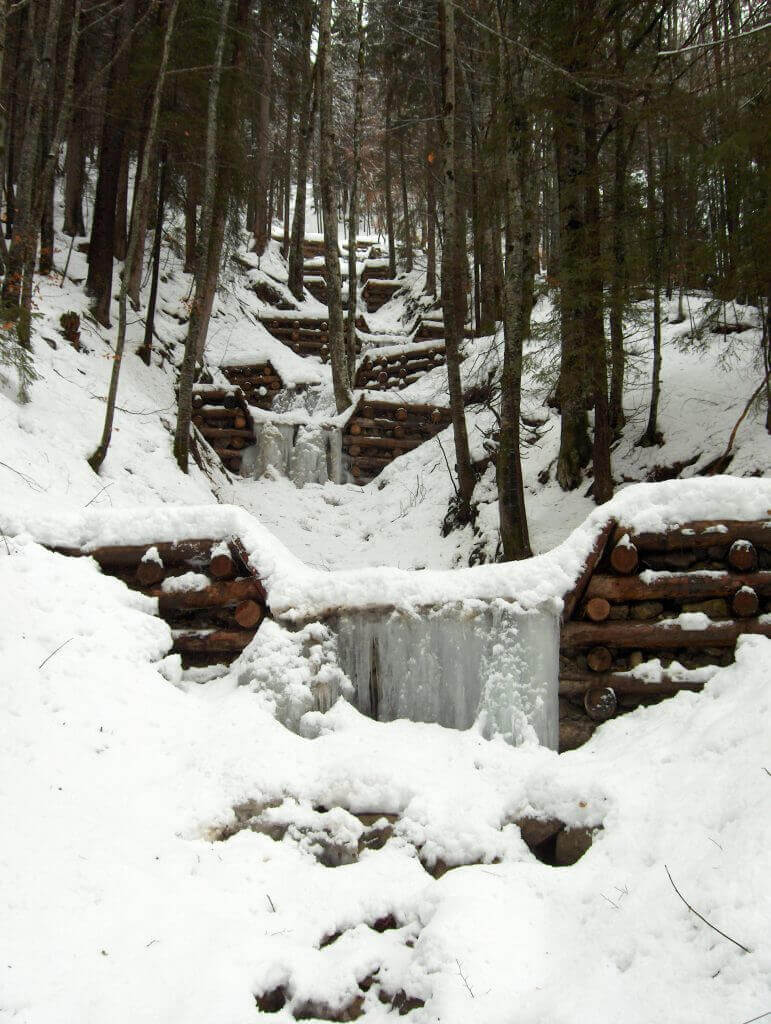 Mélèze Montagne