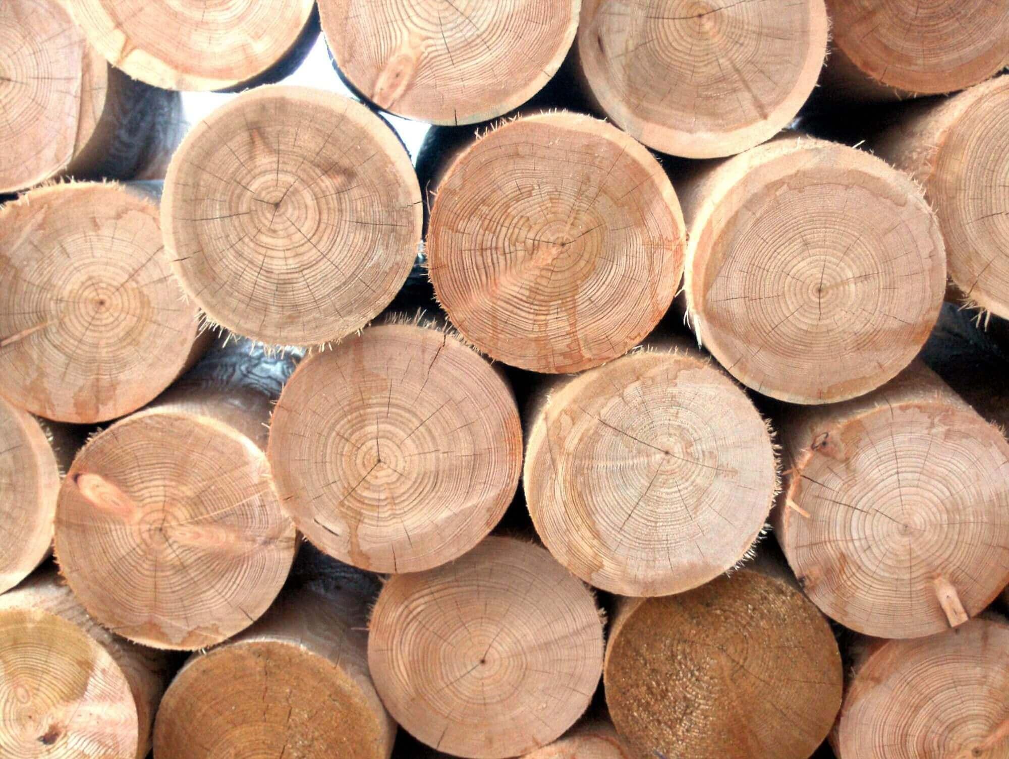 Quelles Sont Les Différents Types De Bois les différents types de traitement du bois - dynamique