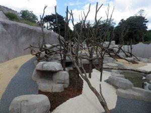 agres-lianes-babouins-zoo-vincennes